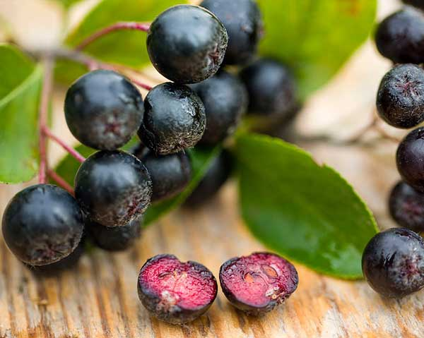 Aroniabär - aronia bra för diabetiker.