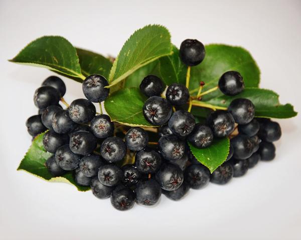 Klasar med aroniabär - superantioxidant, bra för hälsan.