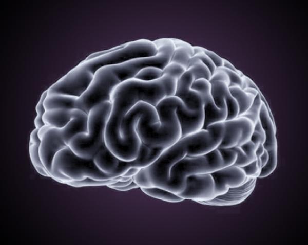 Hjärna - aroniajuice är bra för minnet.