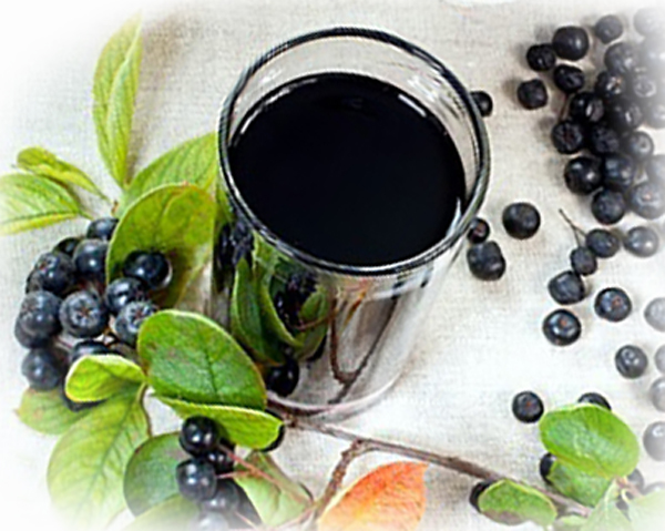 Aroniajuice i glas och aroniabär, aroniakvist - kost kan påverka mitokondriefunktionen i cancerceller.